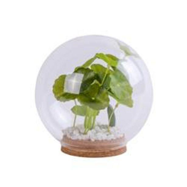 BOLA Plant in serre groen Ø 15 cm offre à 2,68€